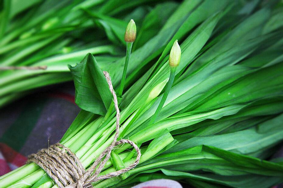 Черемша — зелёный подарок весны