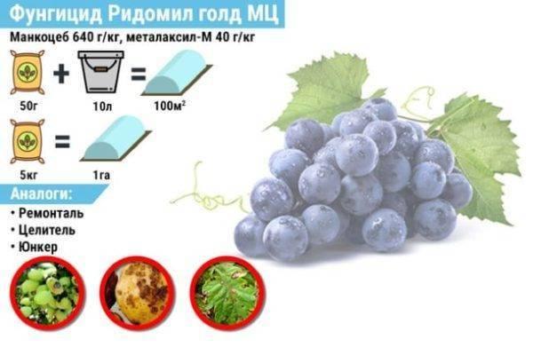 Ридомил голд для винограда, инструкция по применению.