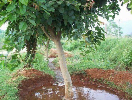 Как проводят полив деревьев весной?