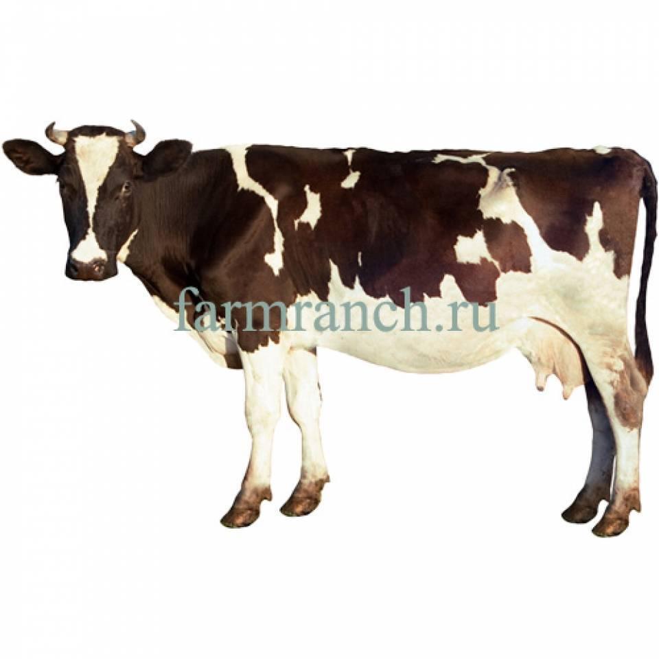 Электроизгороди для овец и крупно-рогатого скота