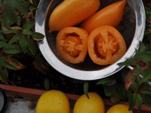 Томат на загляденье – чухлома. рекомендации по выращиванию и описание сорта