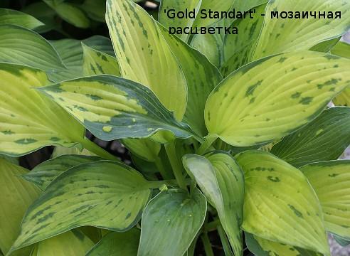 Болезни лилейника (14 фото): что делать, если желтеют листья? борьба с причинами. почему кончики листьев сохнут летом?