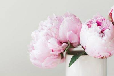 Как хранить срезанные пионы в холодильнике. как сохранить срезанные пионы