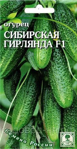 Огурец сибирская гирлянда: описание и характеристика, отзывы