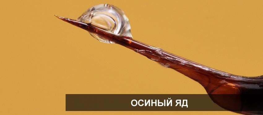 Самая большая оса в мире. где живет и чем опасна - hi-news.ru