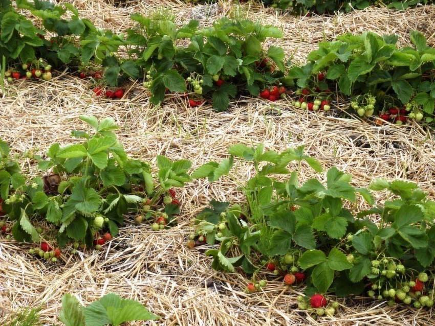 Заморозки и сад весной: защита растений во время цветения. как защитить растения в саду и огороде во время заморозков
