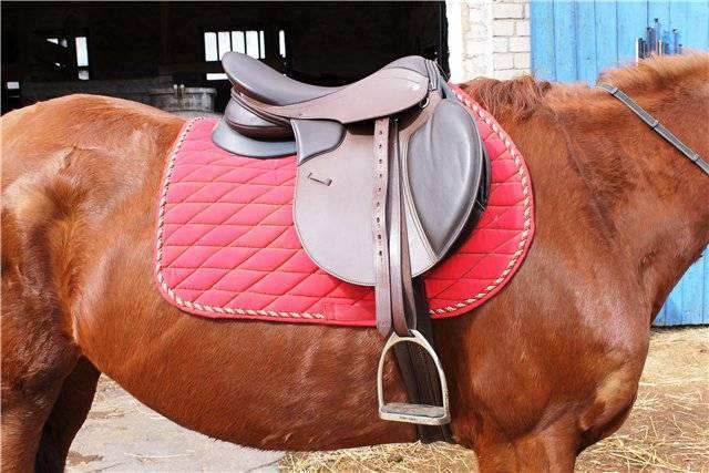 Седло для лошади: как выбрать и надеть?