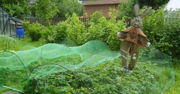 Как защитить клубнику от птиц – использование укрытия, отпугивателей и пугала