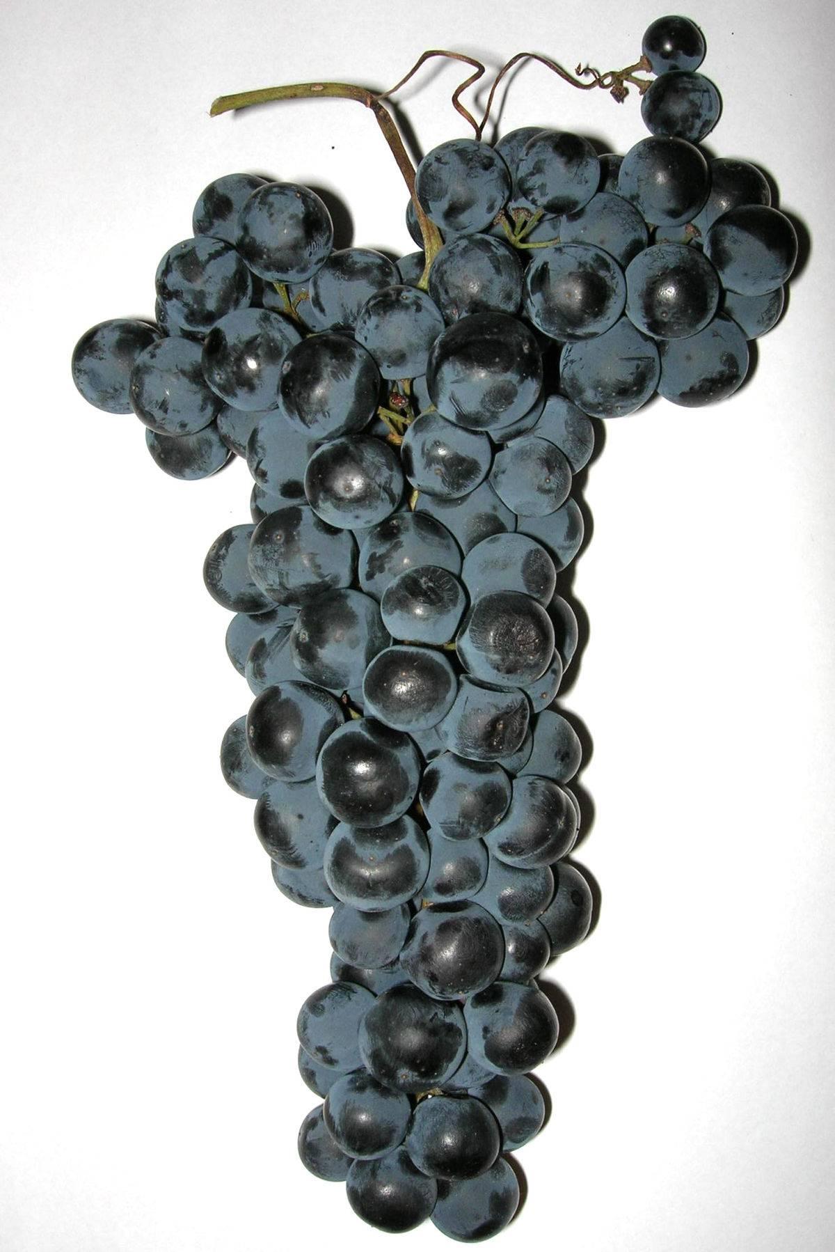 Несколько вопросов и ответов по виноградарству