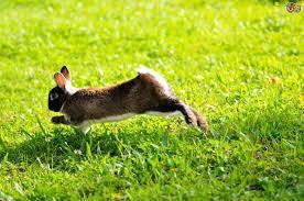 Болезни кроликов и их лечение