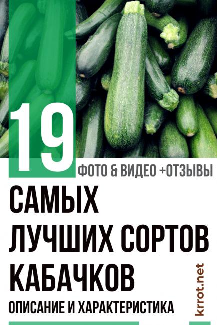 Лучшие сорта кабачков и цукини 2020 для открытого грунта: отзывы, фото семян, по регионам