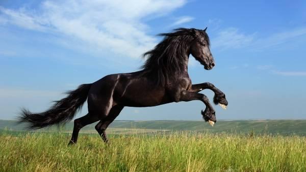 Вес лошади: сколько весит самый большой конь в мире, весовые категории