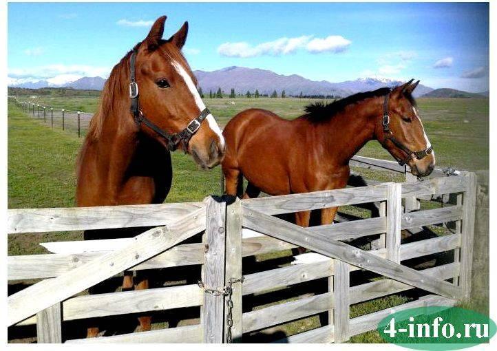 Спаривание лошадей: подбор животных, методы разведения, способы случки