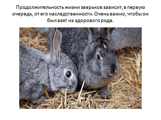 Сколько лет живут домашние декоративные кролики