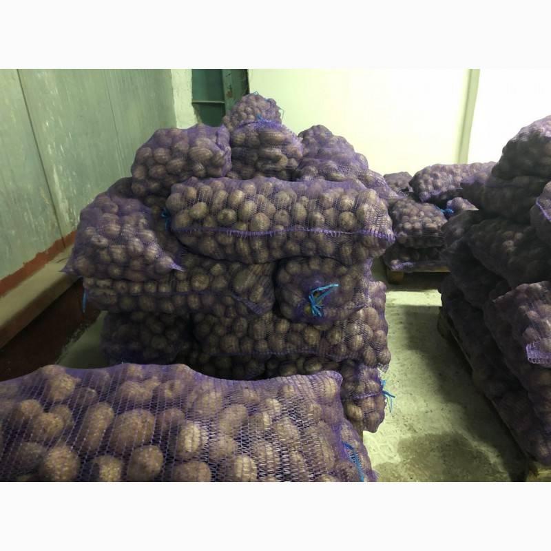 О картофеле Никулинский: описание сорта, характеристики, агротехника