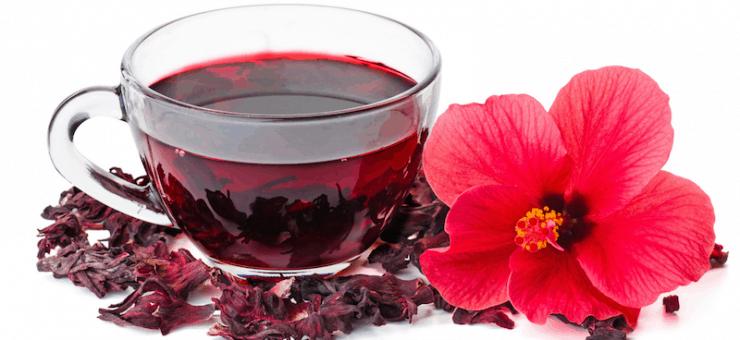 Гибискус и каркаде: это одно и то же или нет, какая разница между hibiscus и суданской розой, чем отличаются сорта растения, как выглядят цветы на фото?