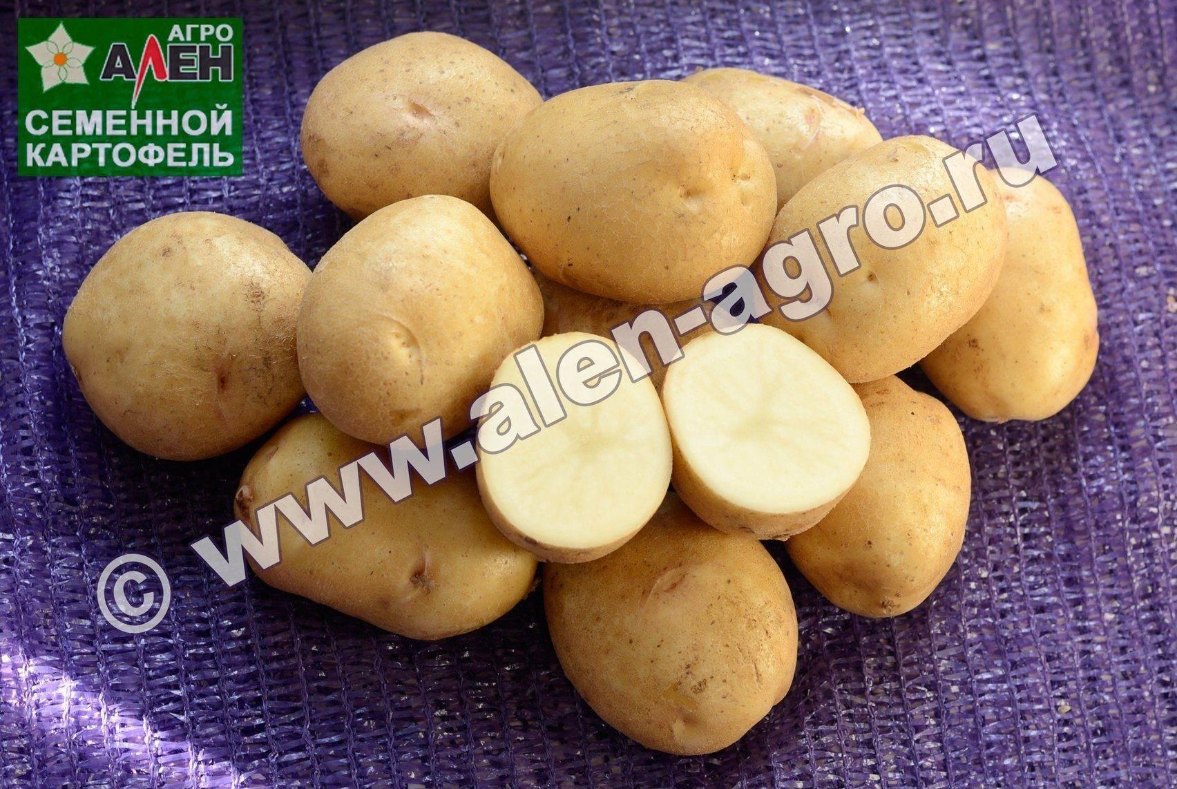 шоу были фото битвы картофеля невский она небольшой