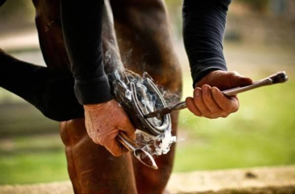 Копыто лошади: все о строении, форме и размере