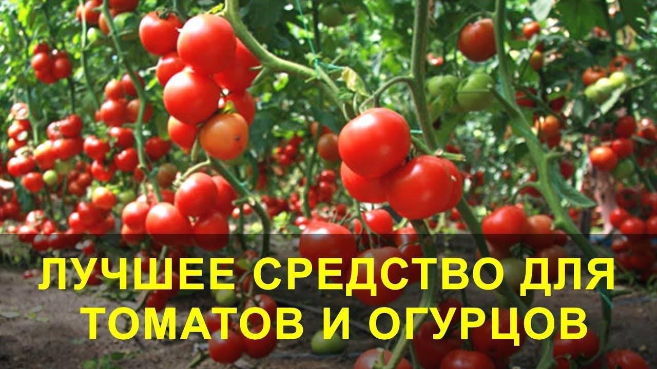 Как подкормить помидоры йодом