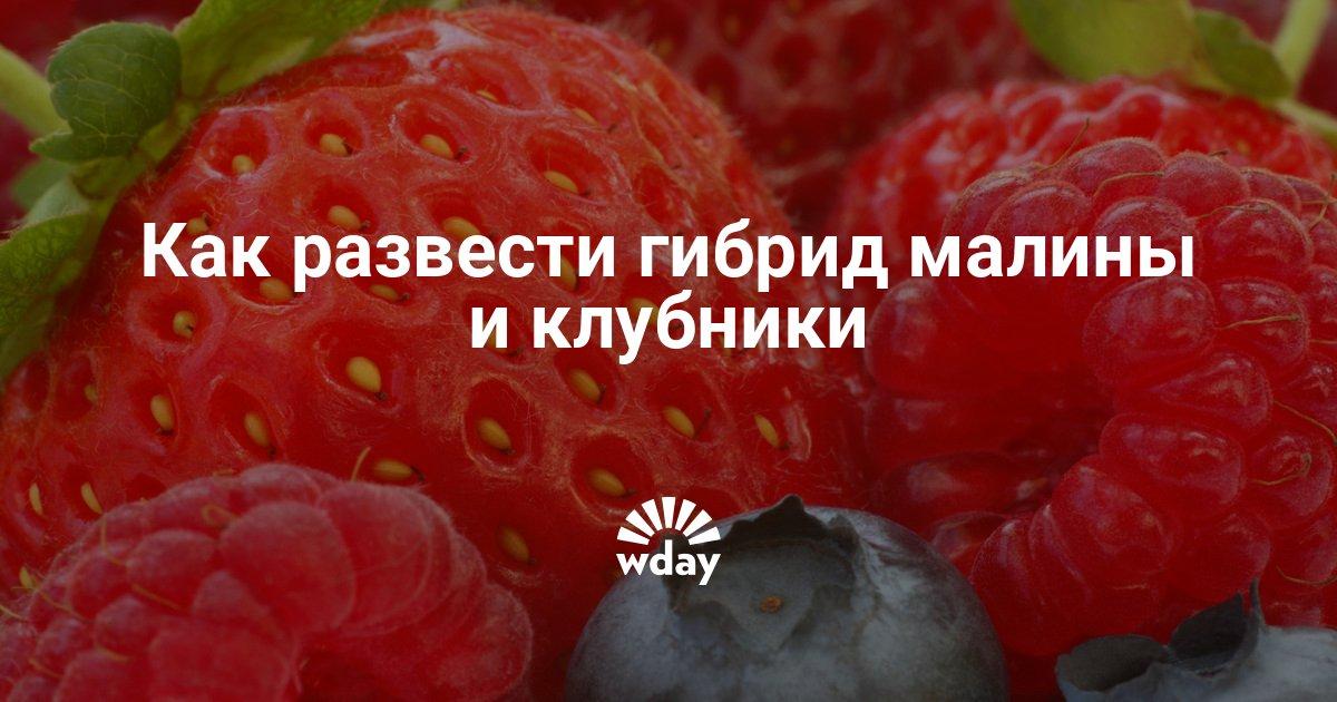 """Домашняя чудо ягодница: правда или """"на лоха"""". реальные отзывы и мнение специалиста"""
