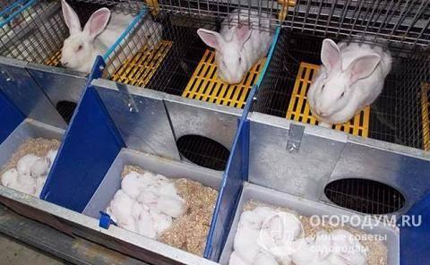 Маточники для крольчих