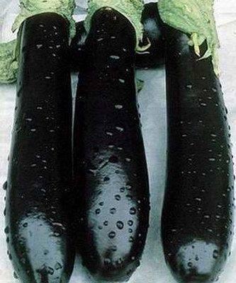 Баклажан валентина f1 — описание сорта, отзывы, урожайность и характеристика