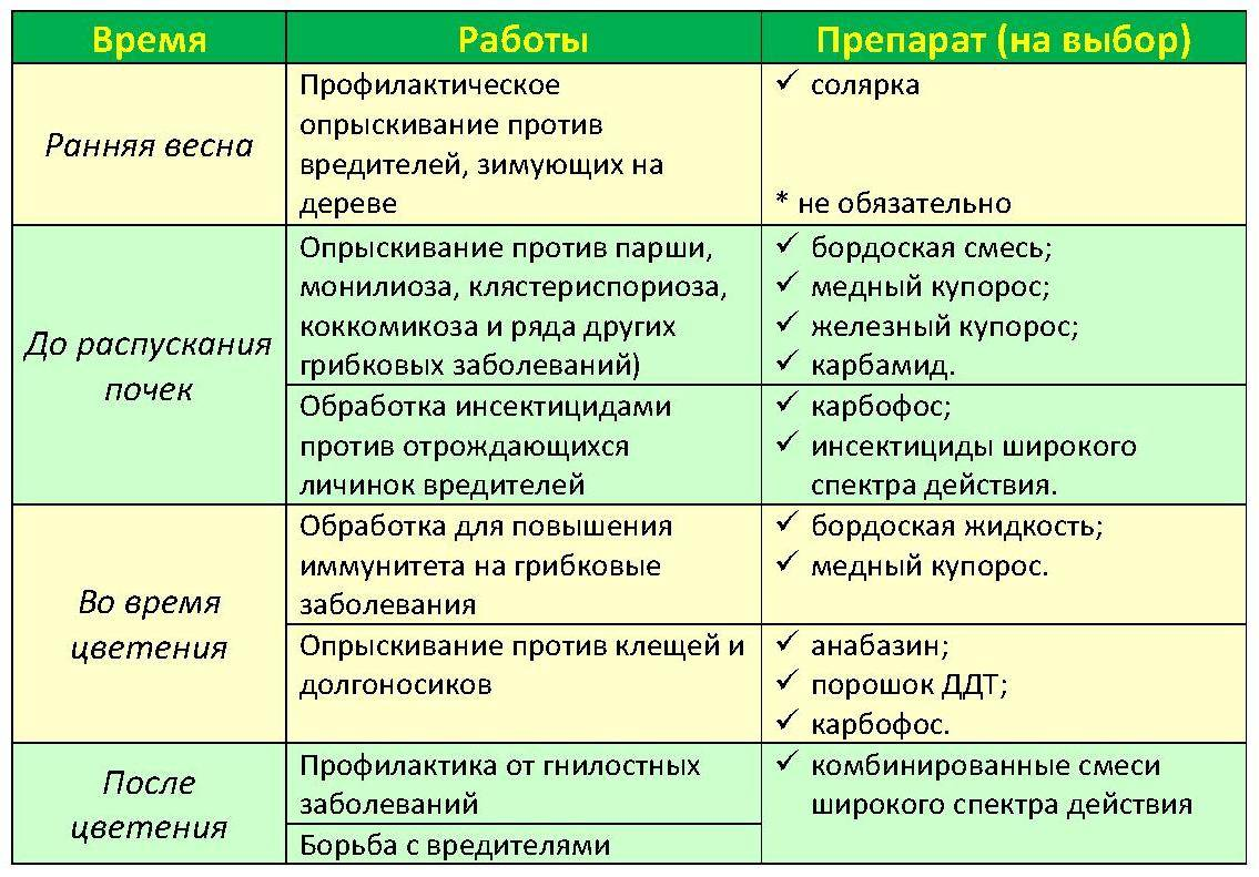 Этапы проведения и препараты для опрыскивания яблонь весной