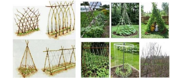 Секреты огородника: как правильно подвязать горох