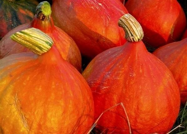 Благоприятные дни для посева тыквы семенами в подмосковье на 2020 год