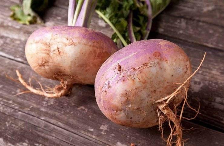 Брюква — выращивание и уход, полезные свойства и противопоказания