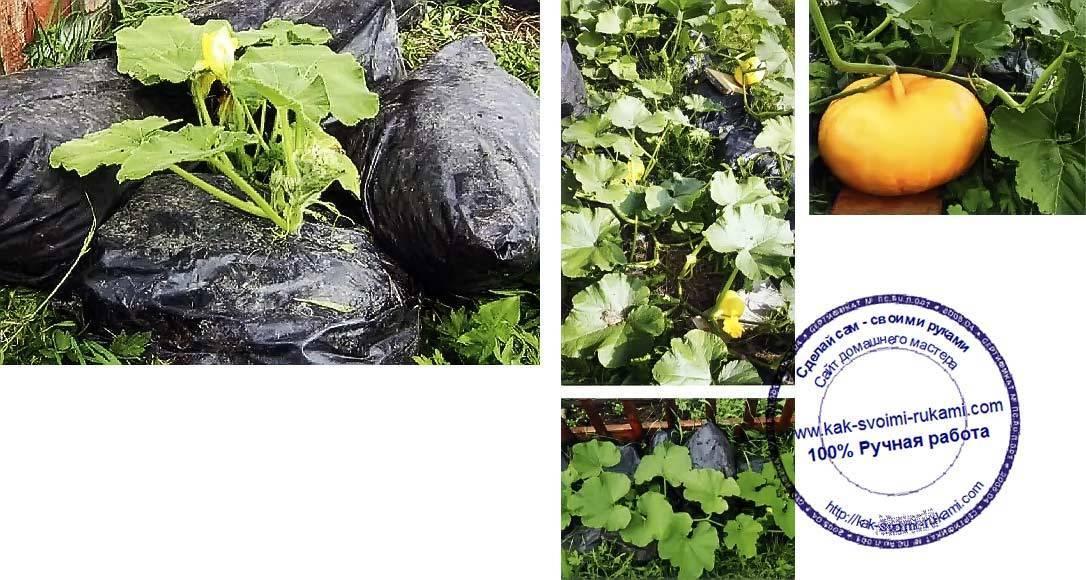 Компостная куча. советы огородникам, как правильно сделать компостную кучу