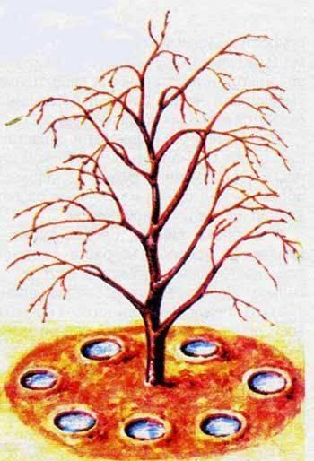 Когда прекращать полив деревьев. уход за молодым садом: полив плодовых деревьев