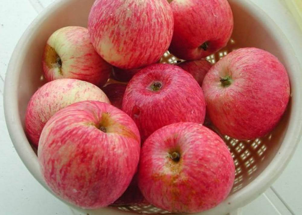 Яблоня 'боровинка'