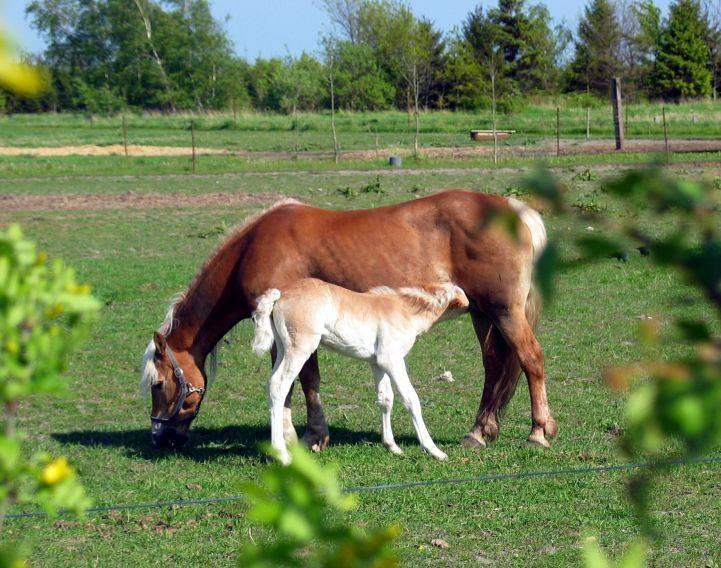 Сонник пить у лошади молоко. к чему снится пить у лошади молоко видеть во сне - сонник дома солнца