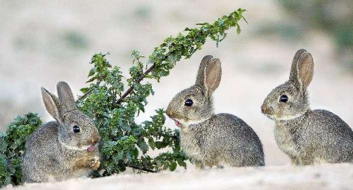 Все о разведение кроликов в ямах: особенности,технология
