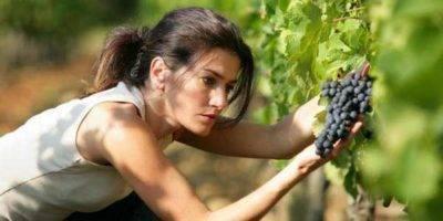 Как защитить клубнику от птиц: проверенные способы