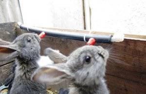 Крольчатник своими руками: пошаговые инструкции