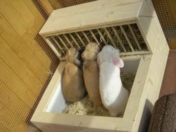 Пять кормушек для кроликов своими руками — техника изготовления