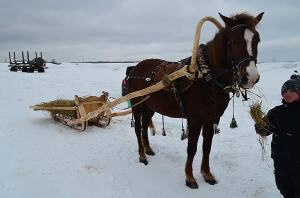Амуниция для лошади: список необходимых аксессуаров