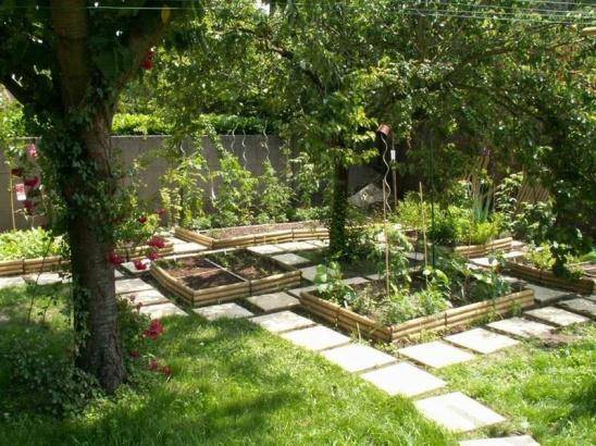 Цветная капуста как выращивать на солнце или в тени