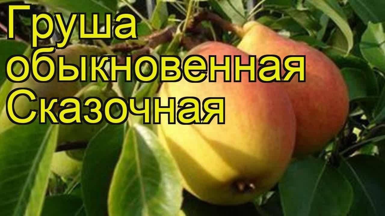 Груша «радужная»: описание сорта и агротехника