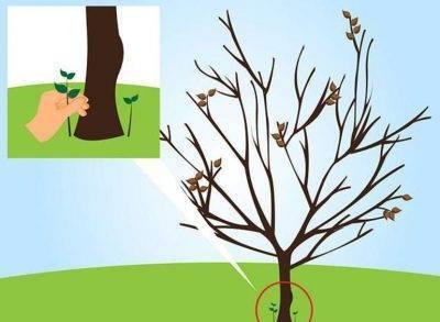 9 действенных способов выкорчевать старый пень на участке