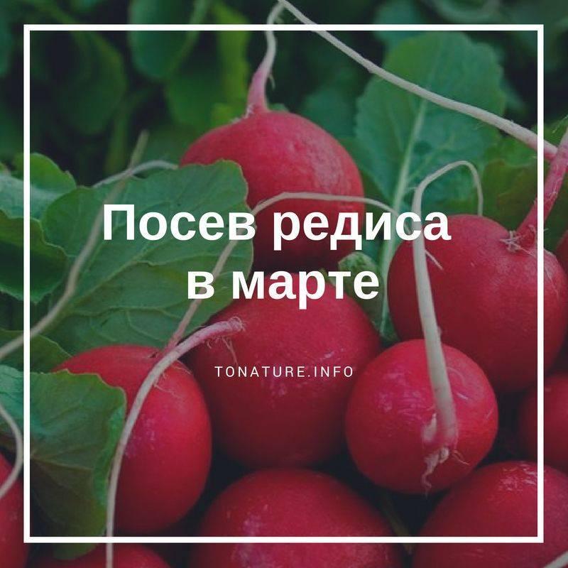 Лучшие сорта редиса для открытого грунта - выбор и выращивание своими руками!