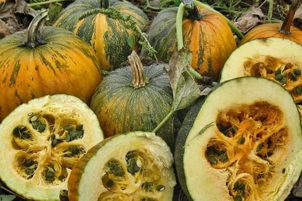 Лучшие сорта тыквы для семечек: особенности выбора и нюансы выращивания