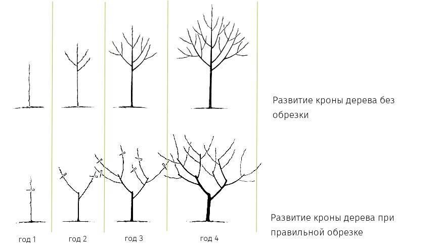 Обрезка деревьев и кустарников – советы и рекомендации