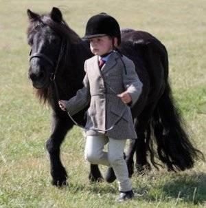 Мини-лошадь