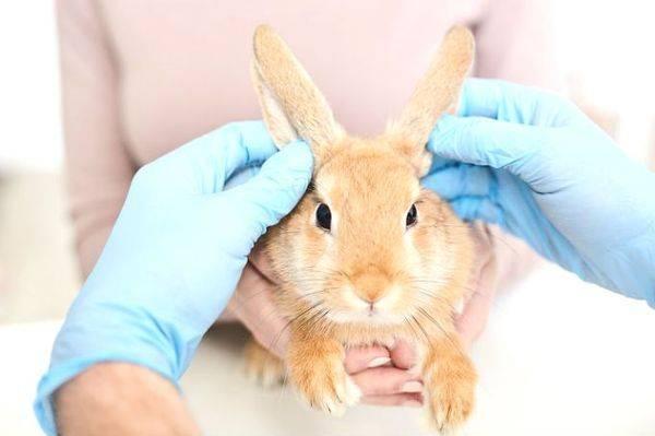 Почему умирают кролики без видимых причин: болезни крольчат в возрасте 1 месяц