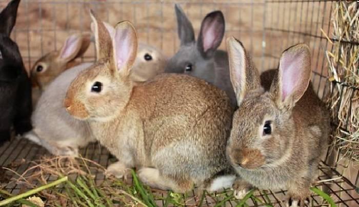 Чем кормить кроликов: свойства и разновидности кормов