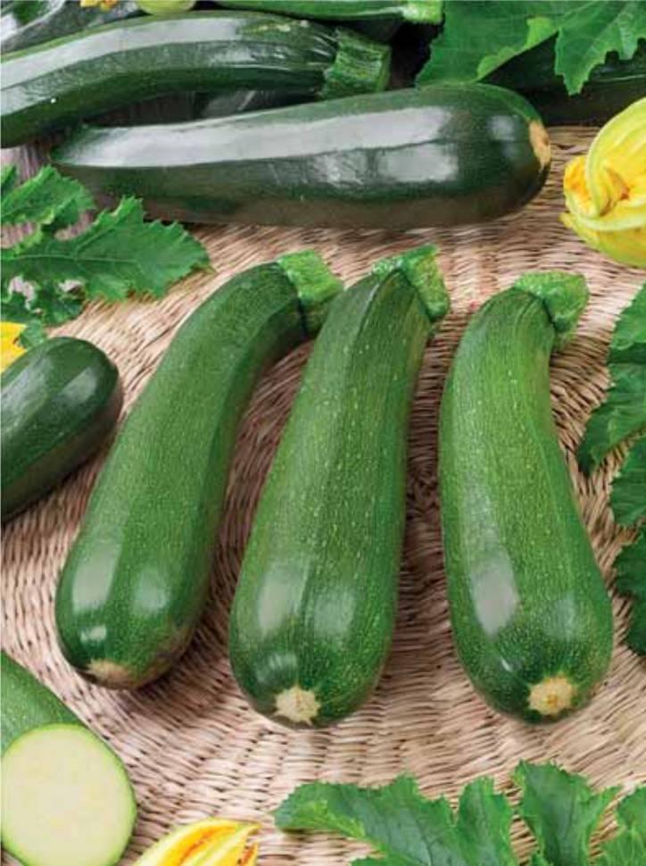 Как вырастить кабачки цукини