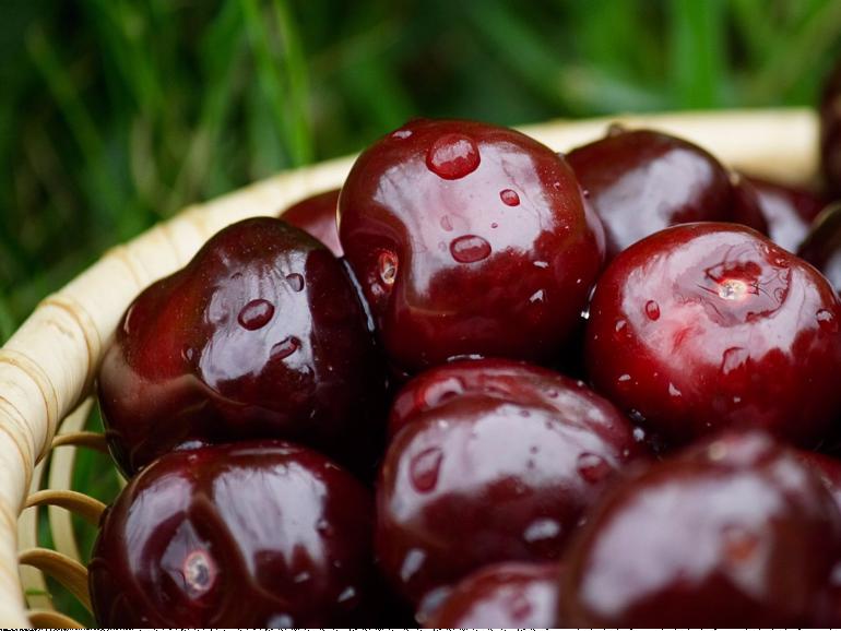Чем можно обработать сливы, чтобы не было червей в плодах